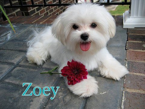 Zoey4-002.jpg
